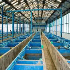 ornamental fish farm and export company global sources