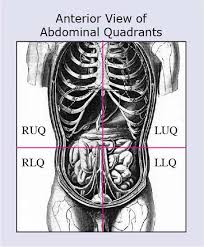 Pictures Of The Anatomy Of The Human Body Anatomical Terms U0026 Meaning Anatomy Regions Planes Areas Directions