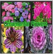 ornamental flowers android apps on play