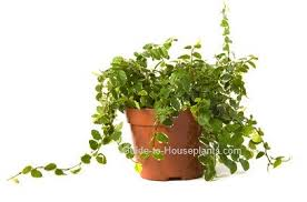 Easy To Care For Indoor Plants Guide To House Plants Tips For Growing Plants Indoors