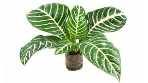 indoor plants that need little light homelife top 15 indoor plants
