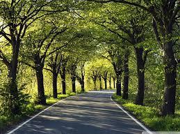 road among trees hd desktop wallpaper high definition