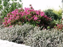 fleurs vivaces rustiques suite et fin le jardin de camélia