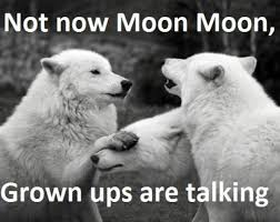 Wolf Memes - guy s werewolf name is moon moon internet weighs in 20 photos