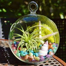 shop hanging air plant terrarium on wanelo