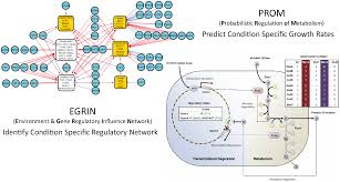 combining inferred regulatory and reconstructed metabolic networks