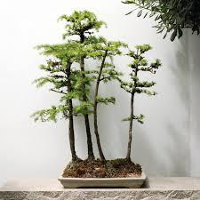 Garden Art International Portland Chinese Garden Puts Penjing An Ancient Garden Art On