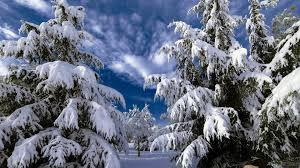 photo collection snowy tree branches widescreen