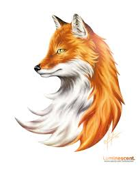 vulpes vulpes animals pinterest foxes fox drawing and