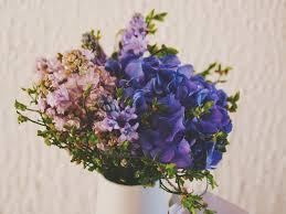 free images blossom purple petal vase blue flora hydrangea