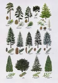 different types of trees 8 proximity the elements different types of trees are placed