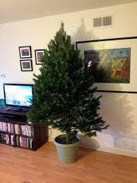 cheap christmas tree what is the best way to make a christmas tree stand quora