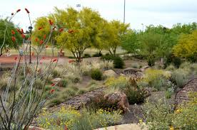 Scottsdale Az Botanical Gardens by A Jewel In The City Sustainable Landscapes Part 3 Ramblings