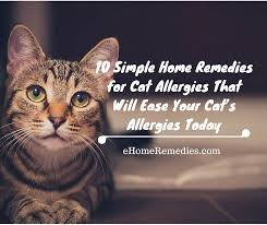 10 simple home remedies for cat allergies