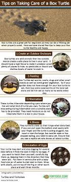 155 best my images on tortoise habitat box