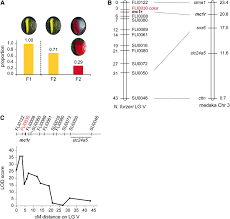 mapping loci associated with tail color and determination in