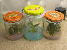i want to start my own plant tissue culture plants in my home