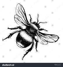 bee drawing stock illustration 592820063 shutterstock