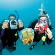 padi digital underwater photographer specialty course scuba