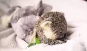 koala dump album on imgur
