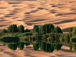 world most popular dry desert wallpaper of camel u2013 itsmyviews com