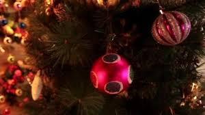 living trees to light up edinburgh u0027s christmas bbc news