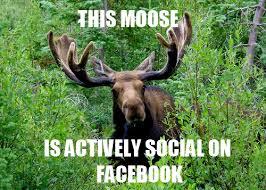 Moose Meme - moose know your meme