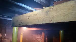 Cost To Remove Mold In Basement - mold removal u0026 clean up company in toms river edison princeton