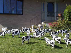 cow lawn ornament free pdf woodworking holy cow lawn