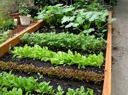When To Plant Spring Vegetable Garden by Spring Vegetable Garden The Only Real Sun In My Yard Lands U2026 Flickr