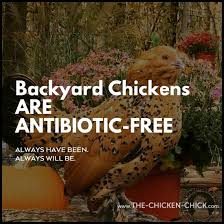 100 backyard chicken supplies 5 ways to feed chickens on a