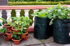 beautiful vegetable garden 3 vegetable garden tips for decluttering