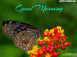 30 morning with butterfly images and quotes wishes