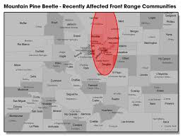 colorado front range map swingle ceo warns of mountain pine beetle in denver