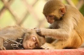 Monkey Bench Monkeys Orange And Green Travel