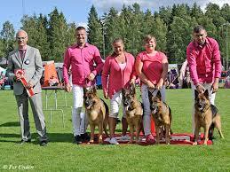 affenpinscher uppf are örebro läns kennelklubb u003cbr u003einternationell hundutställning 2016