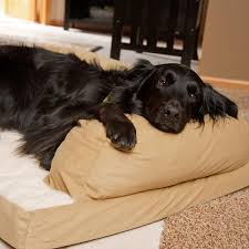 Dog Sofas For Large Dogs by The Very Best Dog Beds For Large Dogs Rover Com