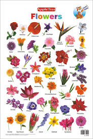 Where To Buy Edible Flowers - edible flowers chart tìm với google stuff to buy pinterest