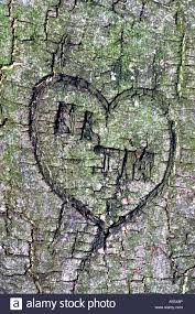 initials carved in tree initials and heart carved into tree stock photo 11207493 alamy