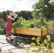 home vegetable garden in orlando organic gardener