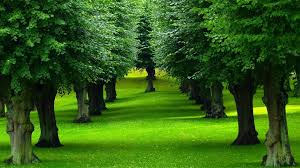 Tree Green Garden With Trees Hd Wallpaper Hd Latest Wallpapers