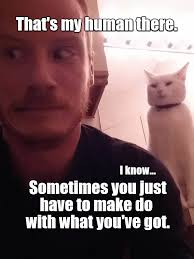 that s my human there lolcats lol cat memes funny cats