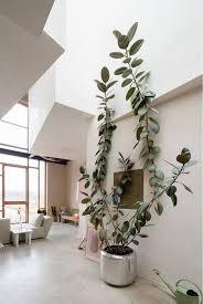 White Bedroom Plants Best 20 Rubber Plant Ideas On Pinterest Fiddle Leaf Fig Tree