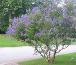 893 best plants shrubs u0026 trees images on pinterest gardening