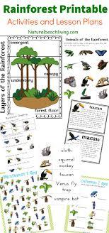 printable kids activities the best rainforest printable activities for kids natural beach living