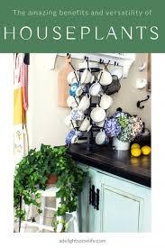 benefits of houseplants the amazing benefits and versatility of houseplants