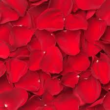 real petals real flower petals fresh petals products local florist in san