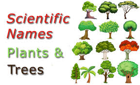 scientific names common plants and trees checkall in