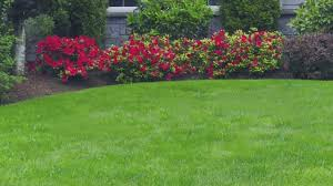 Reno Green Landscaping by Antonucci Lawn And Garden Landscaping Design Reno