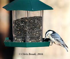 clear plastic window bird feeder bird table feeder photo tony alter flickr cc clear plastic window